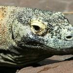 Maak kennis met de voornaamste diersoorten van Indonesië