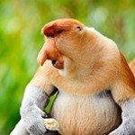De fauna op Borneo is echt fantastisch!