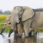Hét natuurwonder van Botswana