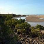 Daintree National Park & Cape Tribulation