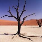 Hét hoogtepunt van Namibië: de Sossusvlei!