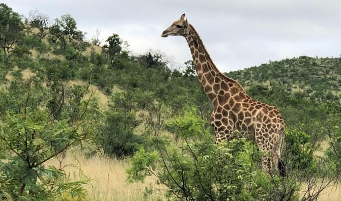 Zuid-Afrika in Vogelvlucht