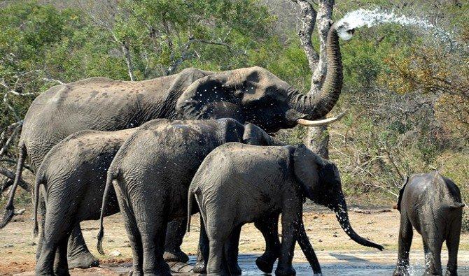 Zuid Afrika Wildlife